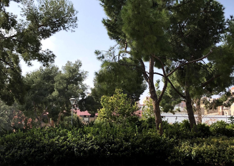 Trees can-mantega-photo-alexia-medici